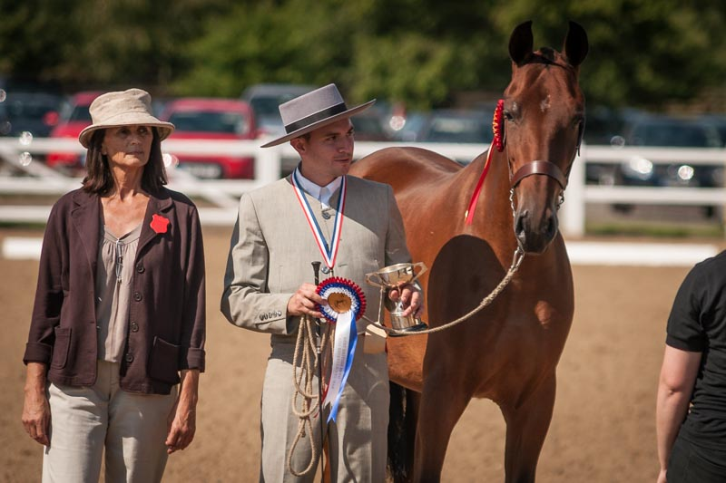 BAPSH illixa PRE Stud & Purebred Spanish Horse Breeder (Andalusians)