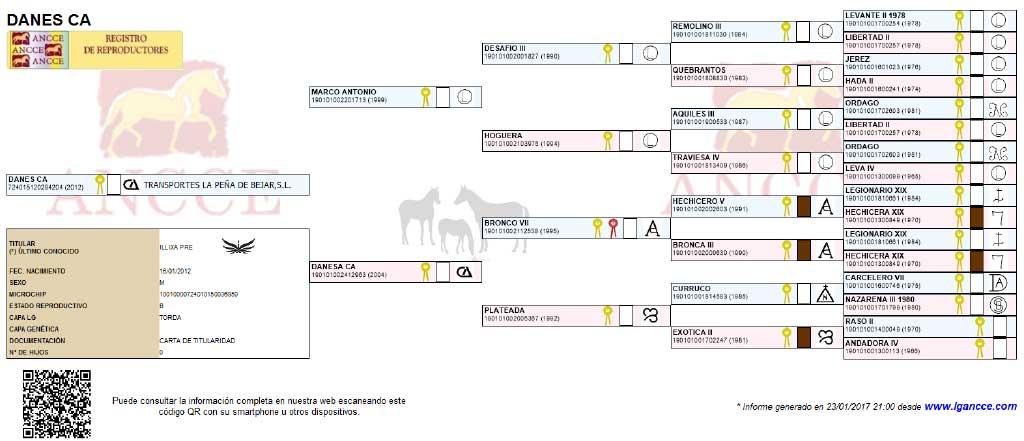 Danes CA PRE Spanish Horse