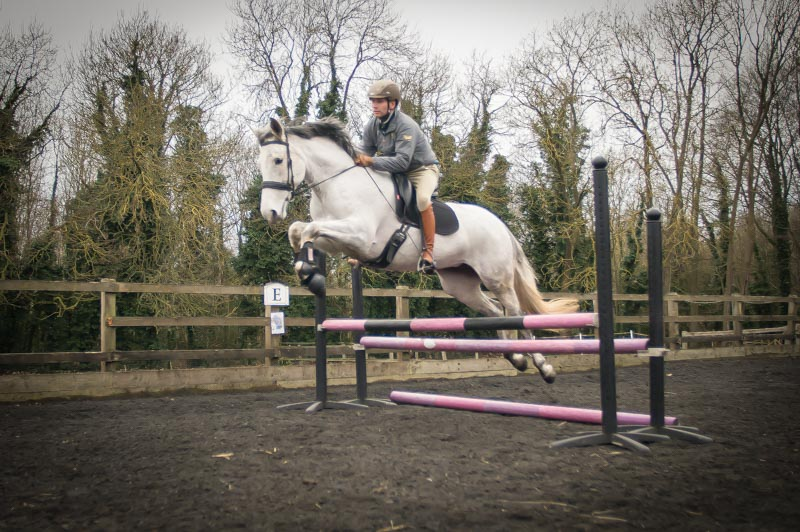 PRE Andalusian Pure Bred Spanish Horse Jumping