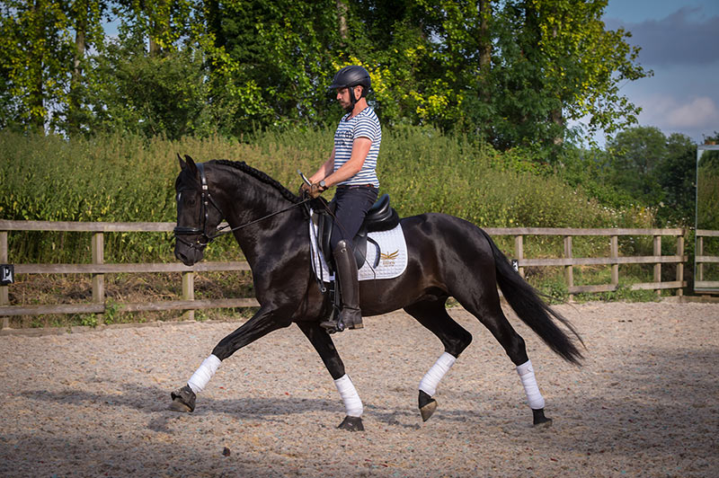 Loki Black Champion PRE Stallion Dressage
