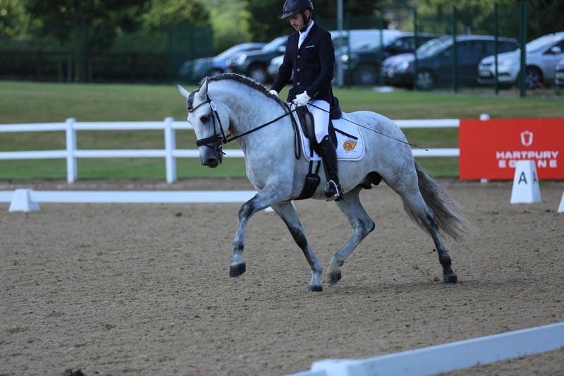 Spanish stallion PRE Stud & Purebred Spanish Horse Breeder (Andalusians)