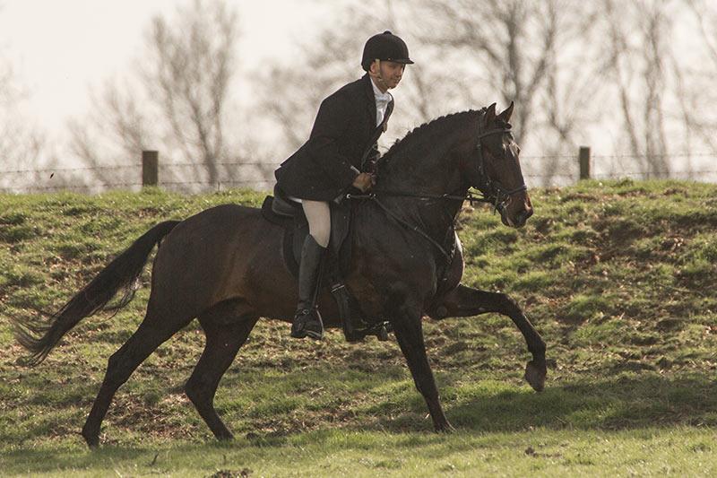Bondadoso PRE Purebred Spanish Horse Hunting