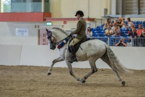 equifest purebred spanish horse PRE Andalusian champion