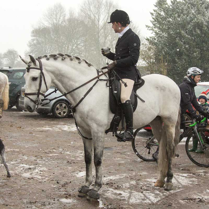 Andalusian PRE purebred Spanish horse hunting