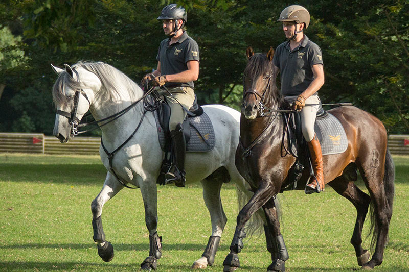 purebred spanish horses cross-country